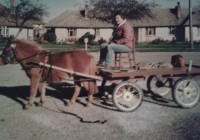The Rescue Pony: Gingerbread's Story