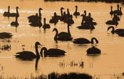 WWT – Welney Wetland Centre