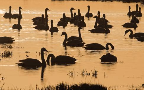 Welney Wetland Centre – Winter beckons