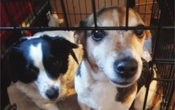 Littleport vets Johnson and Scott saved the life of a beloved dog for Christmas!